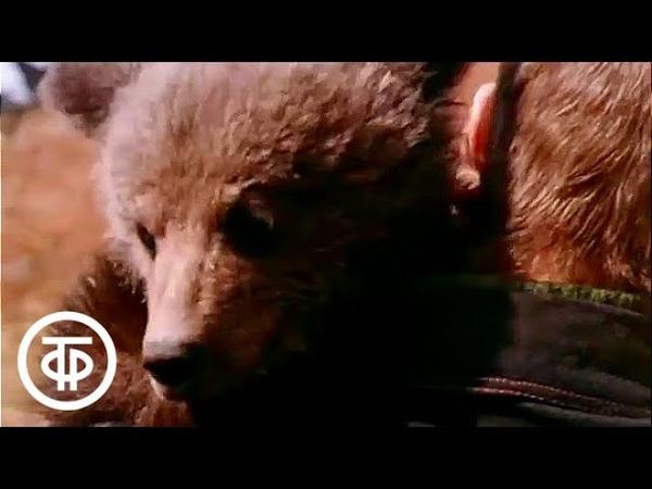 О буром медведе (1978)