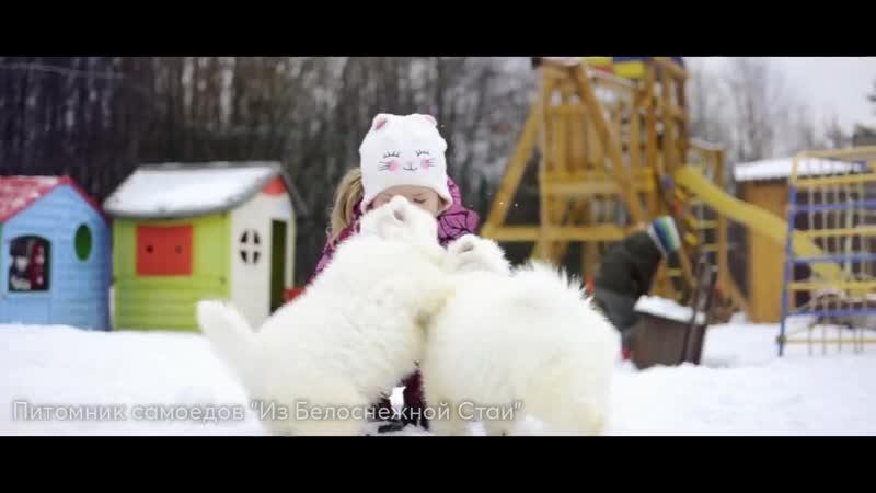 Щенки нашей Хлои на видео 52 53 дня когда наконец то выпал долгожданный снег