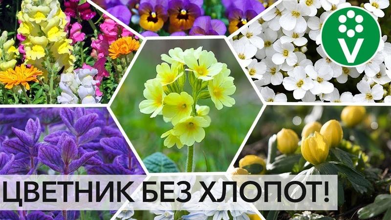 ПОСЕЙТЕ РАЗ И НА ВСЮ ЖИЗНЬ Лучшие цветы которые размножаются сами