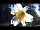 Лечебная музыка: Очищает Ауру и Пространство. Убирает всю негативную энергию