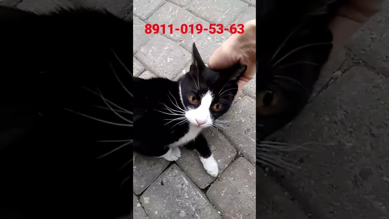 Ласковая кошка брошенка ищет дом. Зову ее Носатенькой .Петербург . Приют