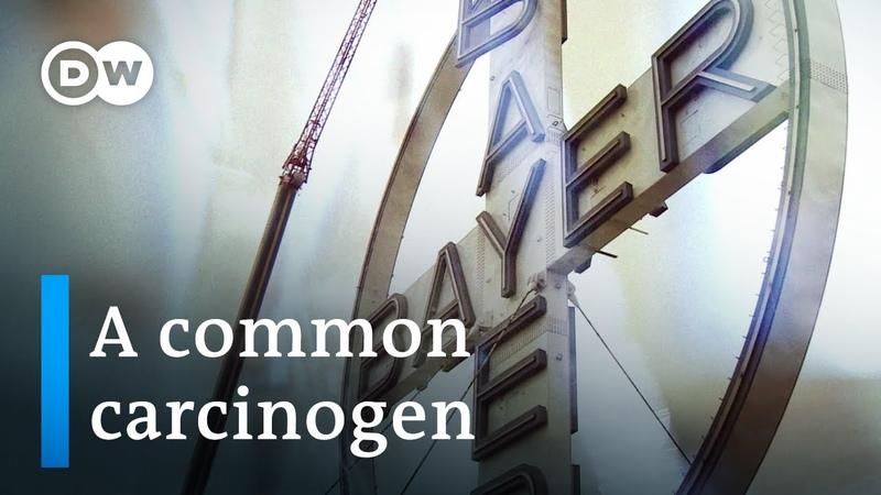 Turning toxic - The Bayer-Monsanto merger | DW Documentary