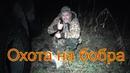 Охота на бобра капканами\ кп 320 на бобра \ castor fiber