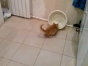Лиза и тазик, игра кошки