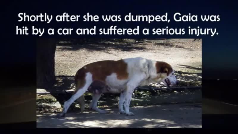 Dog rescue in central California Gaia Sydney Matilda Gabriella Please sh