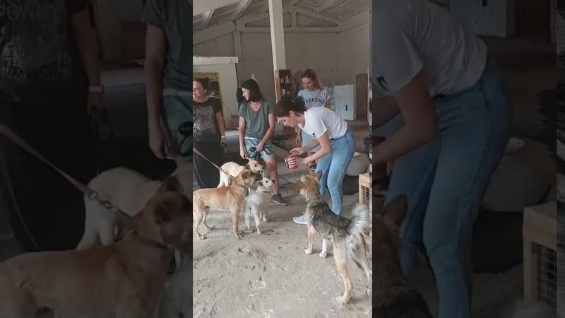 Собаки в добром доме