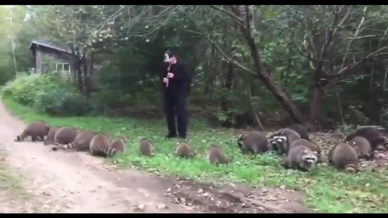 Повелитель енотов выманил зверей из леса