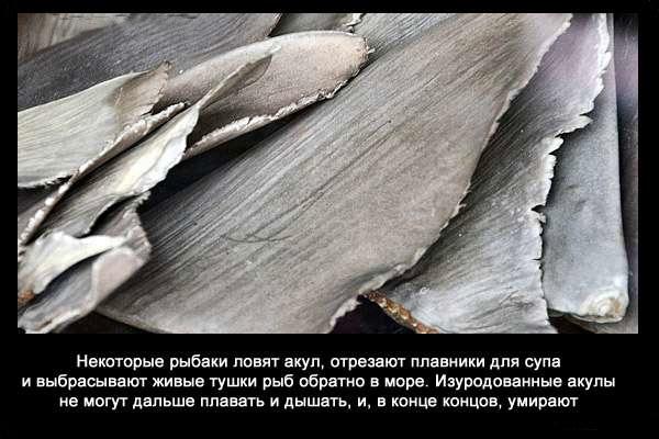 Valteya - Интересные факты о акулах / Хищники морей.(Видео. Фото) - Страница 2 JG9v0XZmNwo