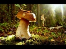Волшебные грибы в волшебном лесу. Мезмай. Грибы в июле.
