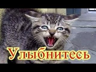 Приколы с котами  Добрый позитив  Видео про котов  Кошки Про Животных Создай себе хорошее настроение