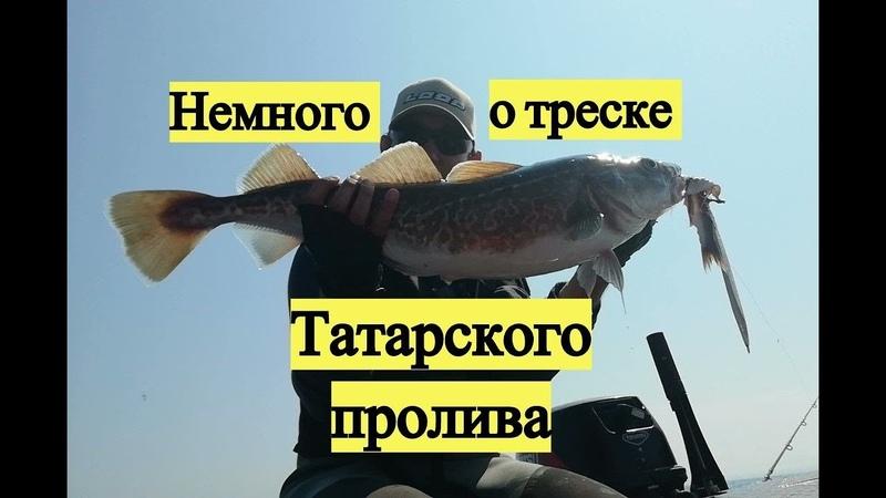 Немного от треске Татарского пролива Pacific Cod Walleye Pollack