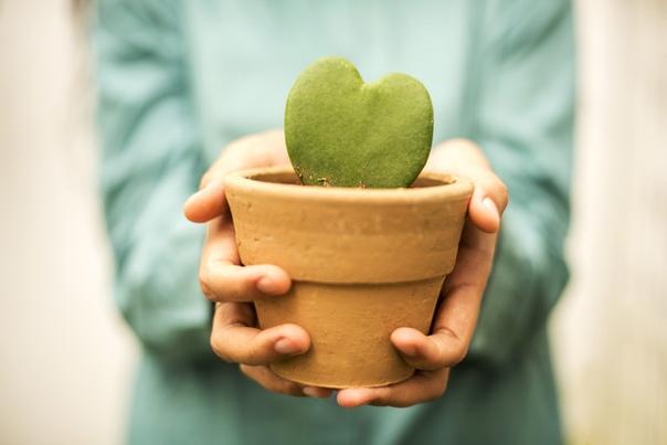 Почему нельзя дарить саженцы и цветы в горшках