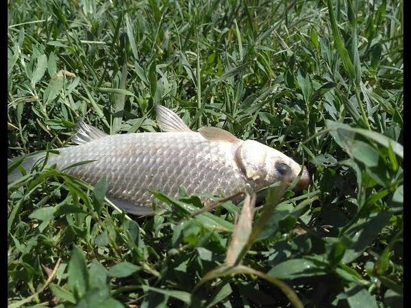 5 мягких насадок сделали всю рыбалку Рыбалка на Ингулке Понятовка Ловля карася в на фидер и донки