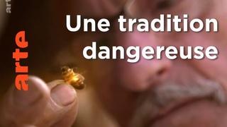 Inde, le miel des montagnes bleues   Les maîtres des abeilles   ARTE