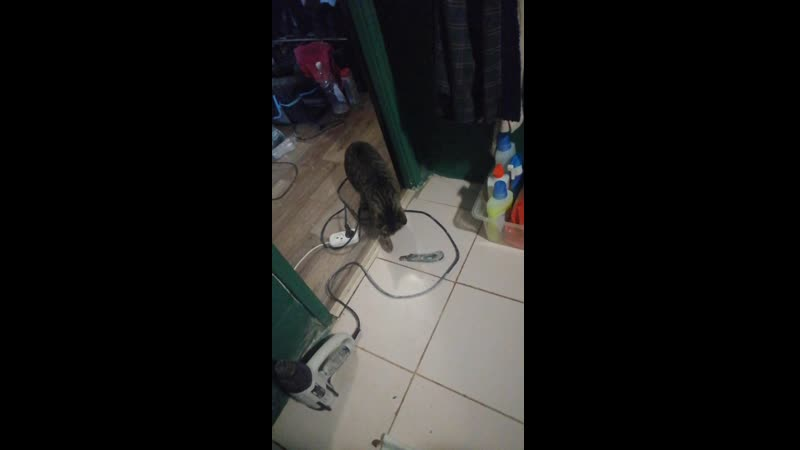Кот помощник реставратора