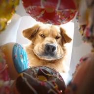 id_20609 Борьба с собой в магазине сладостей 😁  #gif@bon