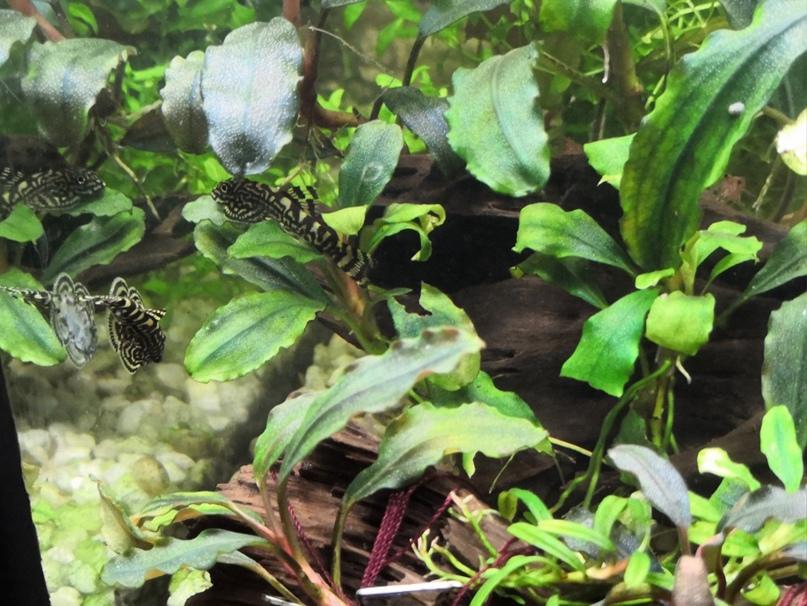 1 Юлия Черкас - Обзор светильника AQUAEL LEDDY SMART 2 PLANT, изображение №12