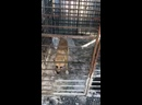 Видео от Виктории Мальковской