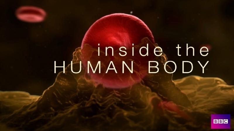 Внутри человеческого тела 4 серии Великобритания