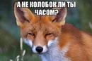 Фотоальбом Светланы Кураленко