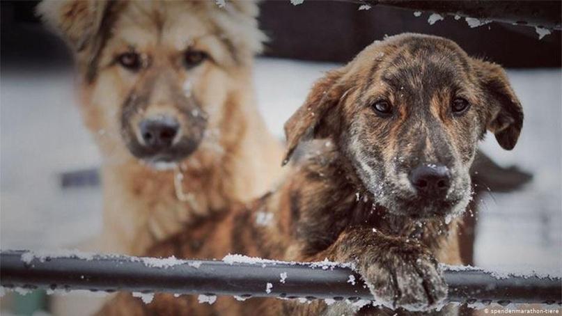 В Германии нет бездомных собак. Однако приютам для домашних животных часто не хв...
