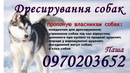 Персональный фотоальбом Пашы Врублевского