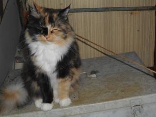 Моя Камышовая кошка