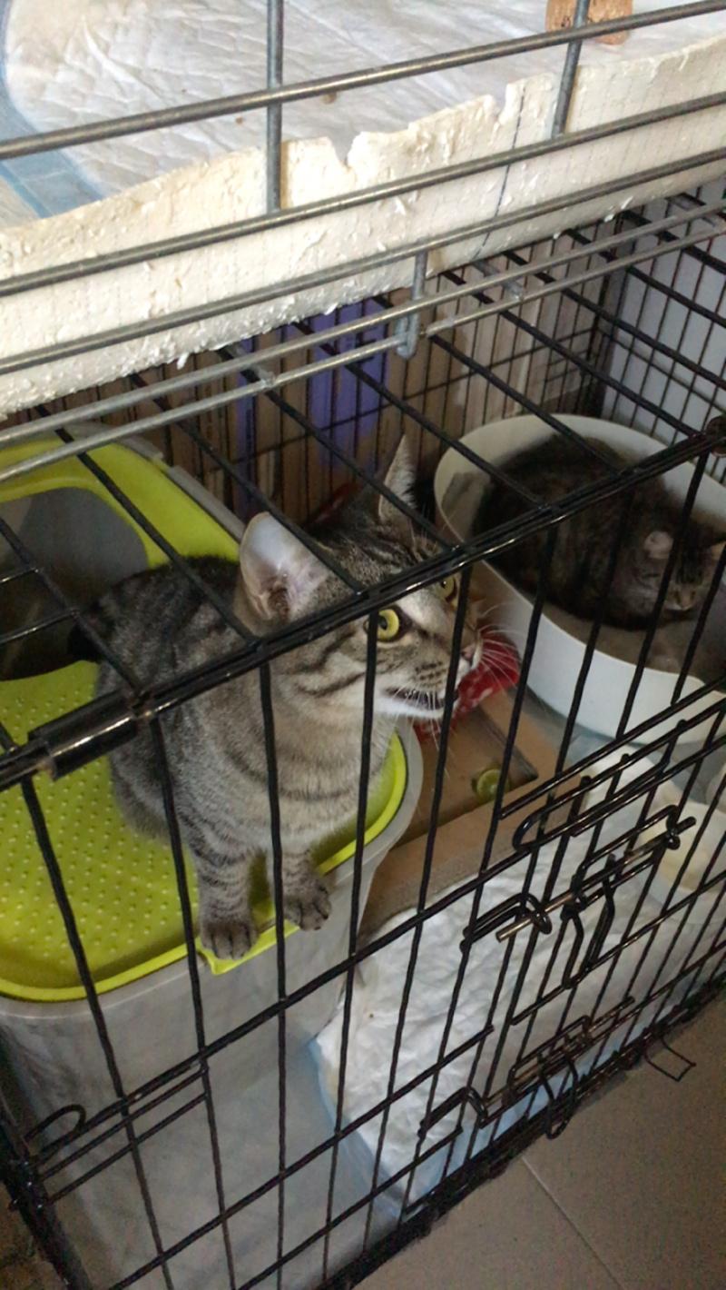 Коты в эвакуации 01.04.2020