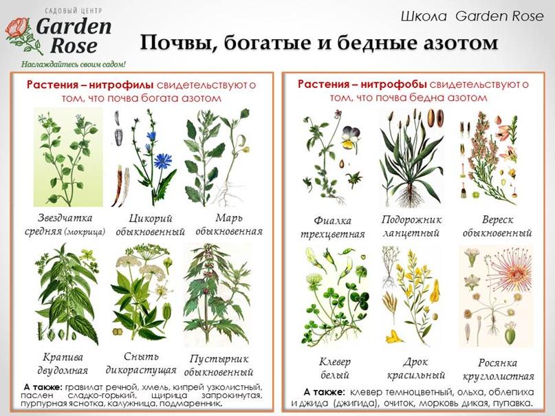 Растения-индикаторы в Вашем саду, изображение №2