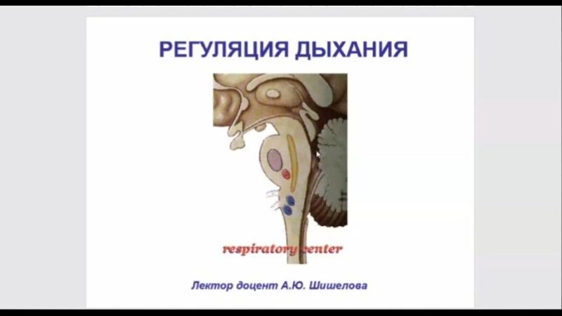 Лекция по физиологии Регуляция дыхания Лектор Шишелова А Ю