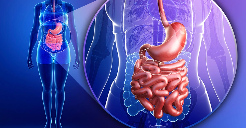 Толстый и тонкий: как наладить работу кишечника