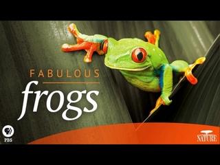Невероятные лягушки / Fabulous Frogs