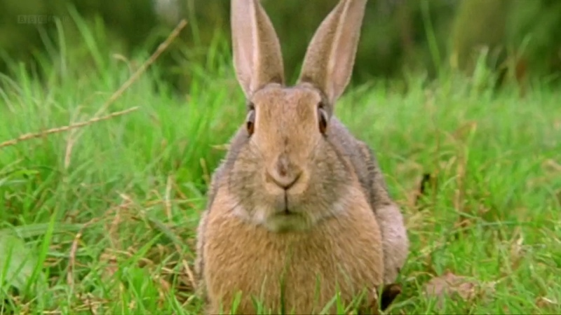 BBC Эти загадочные животные 04 Своеобразные способы добывания пищи