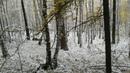 Фотоальбом Вадима Каримова