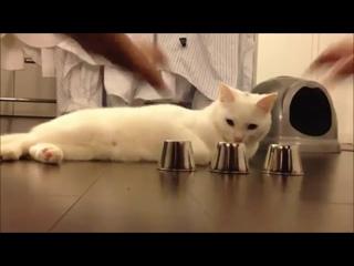 Кручу-верчу, кота запутать хочу