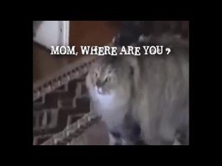 NONONONO Cat Hip Hop Remix with lyrics! HD