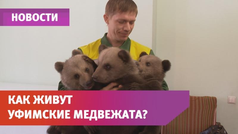 В уфимском парке Лесоводов показали новорожденных медвежат