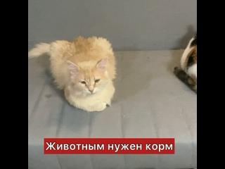 """Video by Дом котиков """"Котэдж"""""""