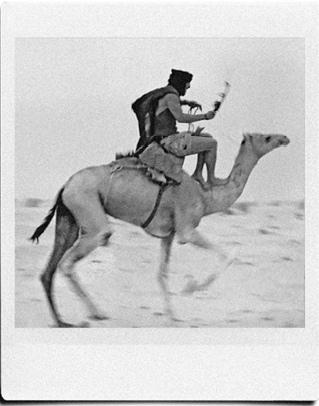 гонка на верблюдах по пустыне