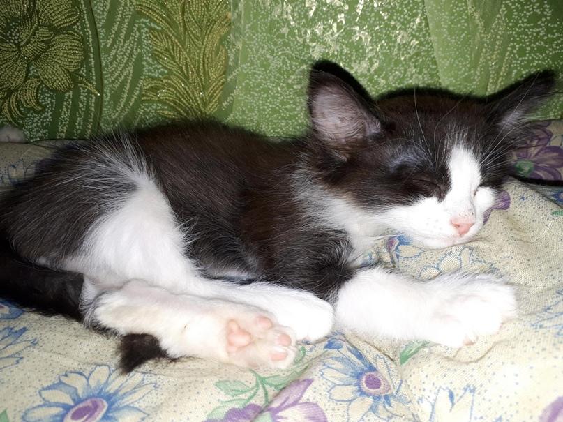 Отдам котят срочно в добрые руки( | Объявления Орска и Новотроицка №23769