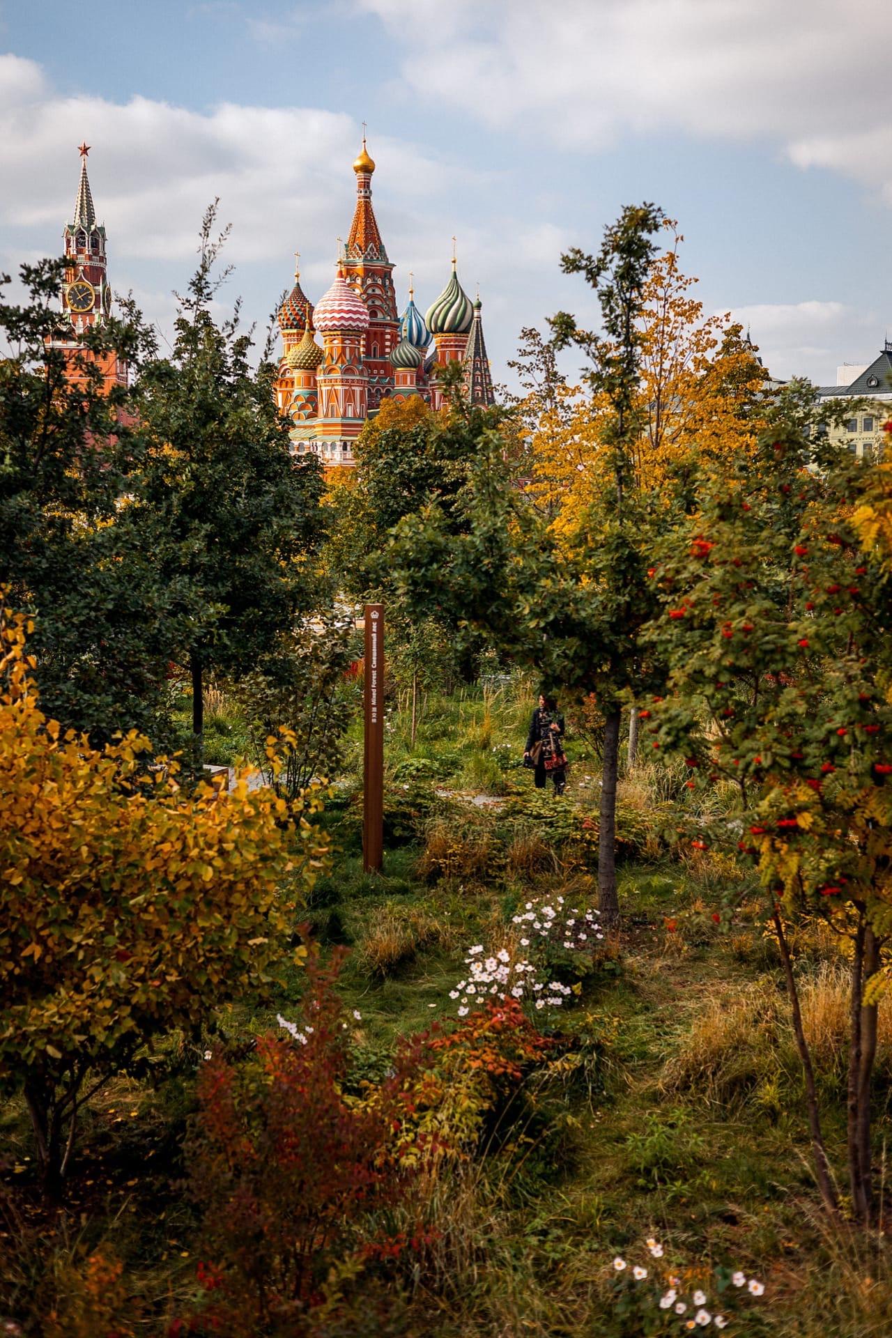 Смешанный лес сейчас залит красками осени