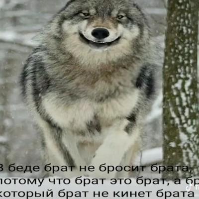 Артём Чехов, Иркутск