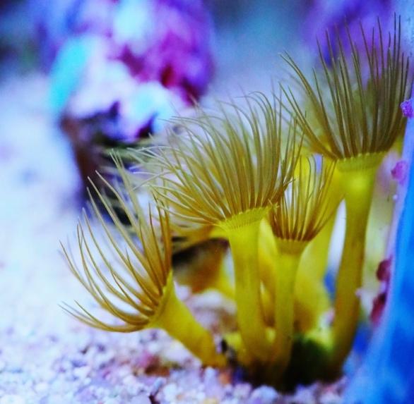 3 Алексей Чучко — Обзор аквариумного набора AQUAEL NANOREEF DUO, изображение №2