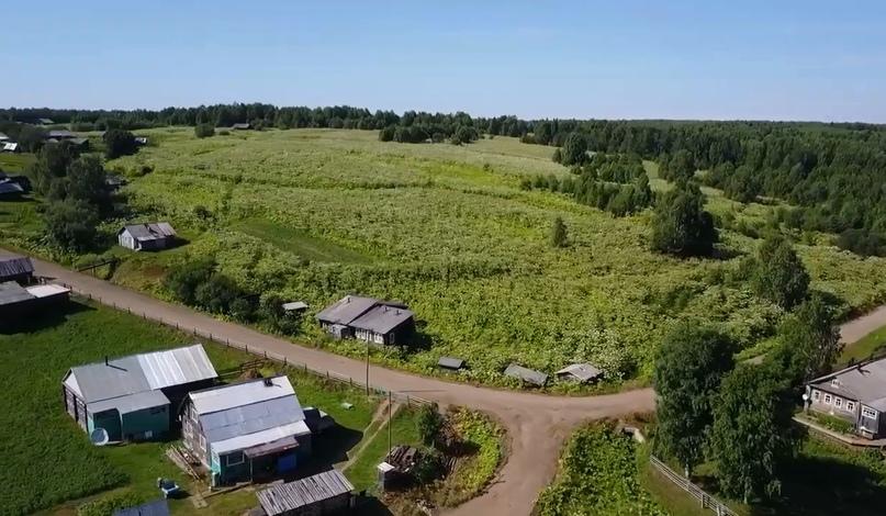 Деревня, заросшая борщевиком