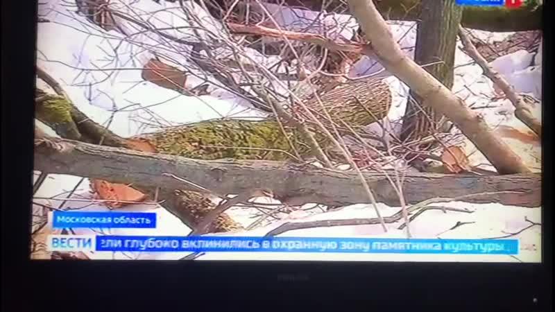 Тотальная вырубка у усадьбы Суханова