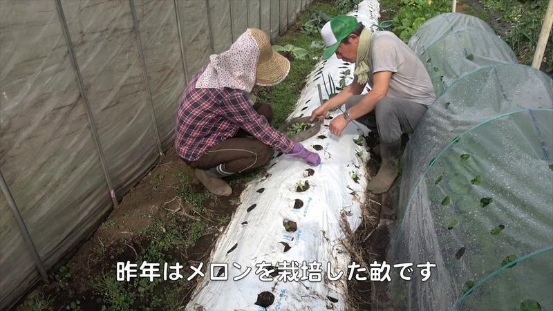菜園だより200214収穫・植え付け