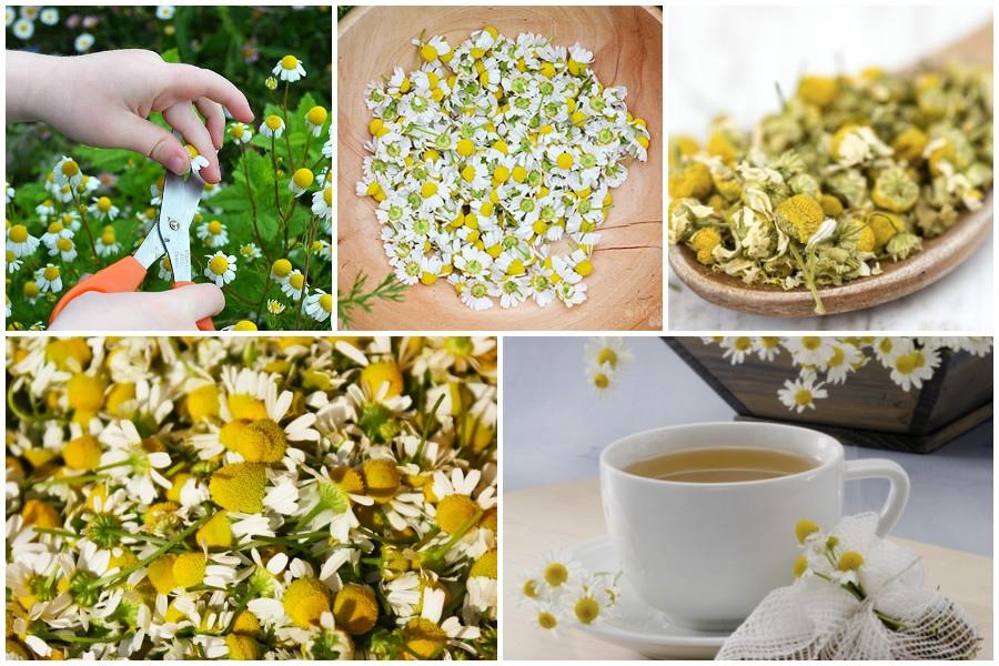 Как приготовить ромашковый чай