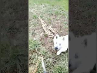 """Отзыв Екатерины из 30 группы о курсе """"Собака: инструкция"""""""