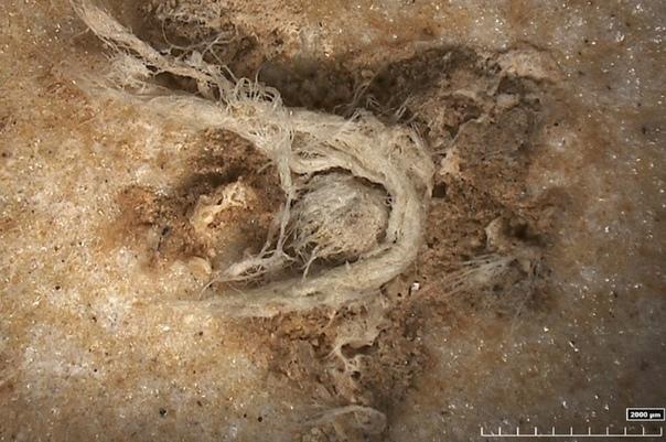 Найдена древняя пряжа, созданная неандертальцами