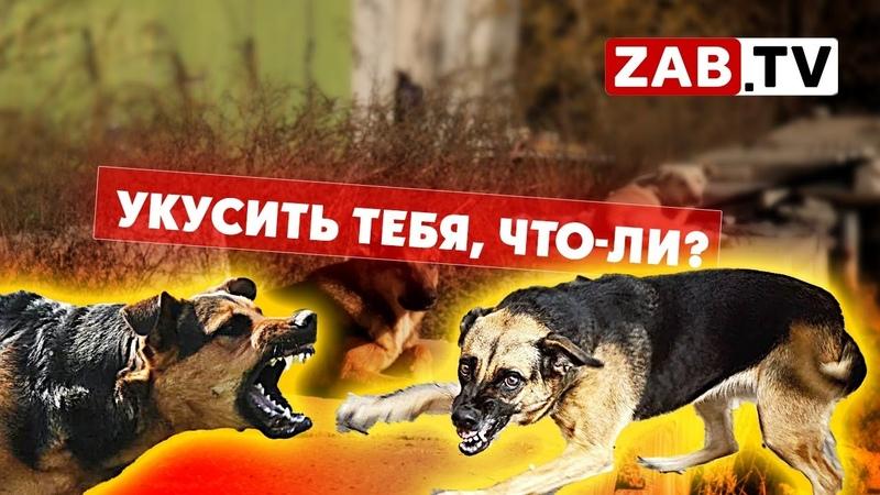 Жилой многоквартирный дом в Чите атакован стаей бездомных собак